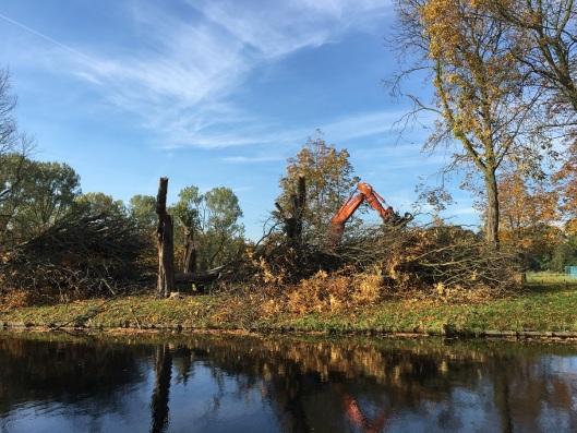 Kaalslag kastanjebomen Vrijheidsdreef Heemstede, 26 oktober 2015 (foto Ellen Toledo)