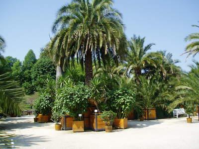 Deel van de exotische Palmentuin