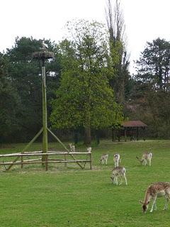 Ooievaar op nest in het hertenkamp van Groenendaal