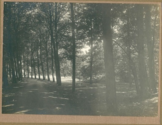 1. Bosgezicht Groenendaal