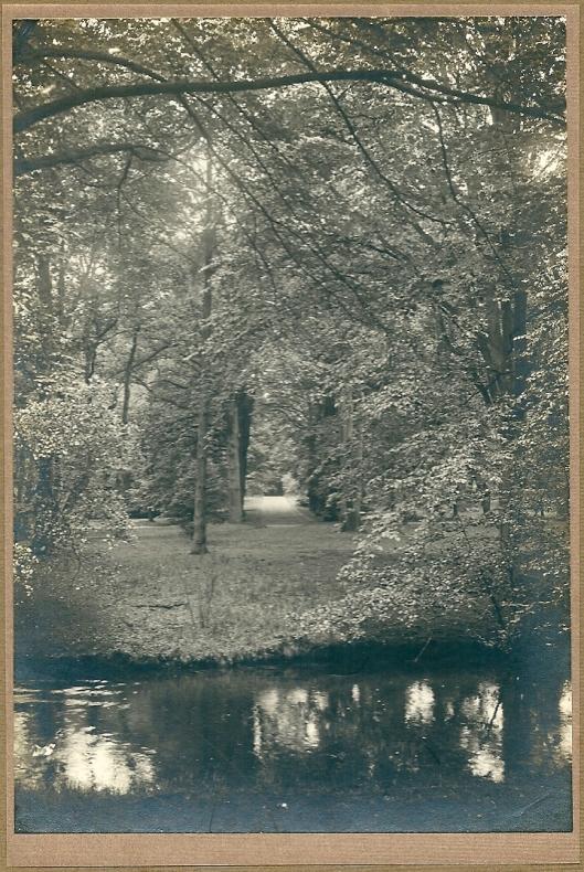2. Bosgezicht Groenendaal