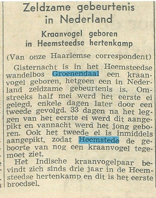 Kraanvogel geboren in Heemstede. Uit: Nieuwsblad van het Noorden, 21-6-1957