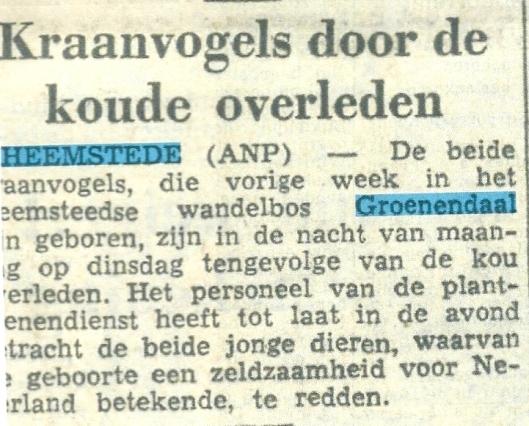 Kraanvogels door de koude overleden. Uit: Friese Koerier van 26 juni 1957