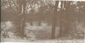 Groenendaal, kom met linden ten westen van het eind 18e eeuws afgebroken buitenhui. Linden meer dan 250 jar oud. Foto winter 1978 door Lucia Albers