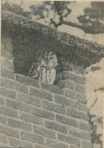 In 1979 had zich een bosuil, die meestal in bomen huizen, gevestigd in een van de schoorstenen van restaraurant Groenendaal. Om niet geroosterd te worden had men de kachel onder de schoorsteen te zijnen gerieve uitgedraaid.