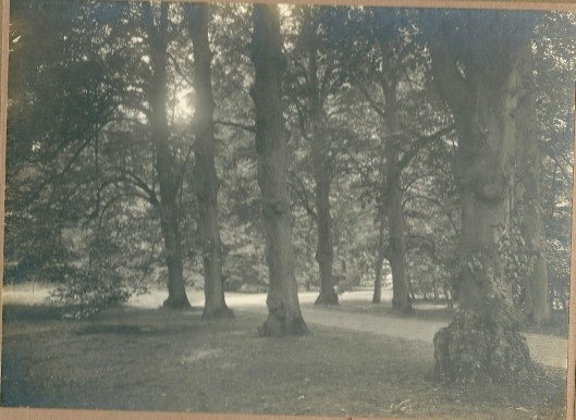 Bosgezicht Groenendaal