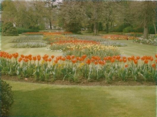Tulpen uit Heemstede