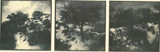 Woestduin, begin 60-er jaren; door Harm Botman uit: Duinen, 1992