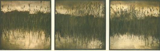 Voorbeeld van gomdrukken van de Amsterdamse Waterleidingduinen door Harm Botman