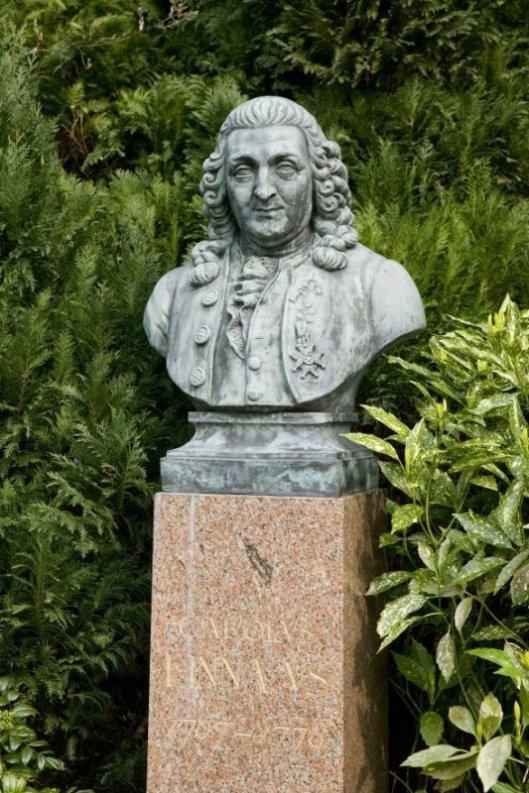 Buste van Linnaeus in de voortuin van de Hartekamp (Rijksdienst Cultureel Erfgoed)