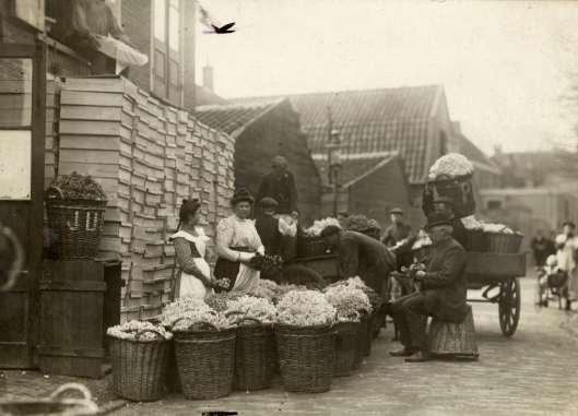 Bollenpelsters bij een bollenschuur met manden vol hyacinthen in de omgeving van Haarlem. Foto uit tijdschrift Het Leven van 1912.