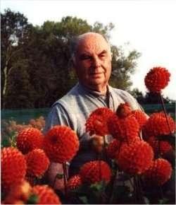 Cor Geerlings (1922-2012), Kadijk, Heemstede, internationaal erkend  kweker van nieuwe dahliasoorten.