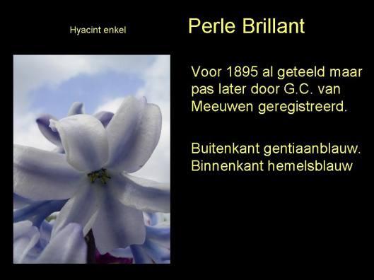 Een specialiteit van Van Meeuwen waren hyacinthen