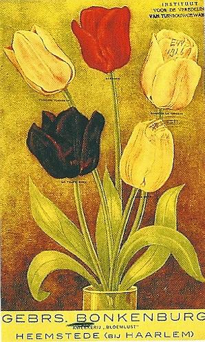 Nog een bloembollencatalogus van Gebrs. Bonkenburg Heemstede (Bibl. Univ. Wageningen)