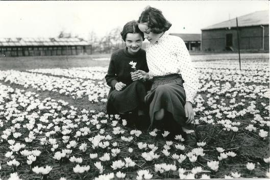 Foto gemaakt door Jo van Bilsen 11-3-1959 van meisjes in een bloeiend crocussenveld tussen Heemstede en Bennebroek