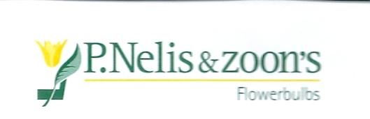 Briefhoofd van de firma P.Nelis en Zoon's [met komma s in plaats van Zoons of Zonen]