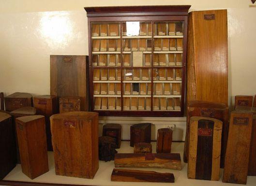 Deel van moderne houtverzameling in Albany Museum, Grahamstown, Zuid-Afrika