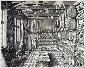 Erts van het kabinet van naturalia en curiositeiten van de 17e eeuwse Deense geleerde en verzamelaar Olaus Worm