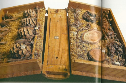 De lariks uit de houtbibliotheek van Carl von Hinterlang