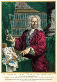 Handgekeurde gravure van Albertus Seba (1665-1736) door Arnold Houbraken uit 1731. Seba was een van de eerste geleerden in ons land die houtsoorten verzamelde.