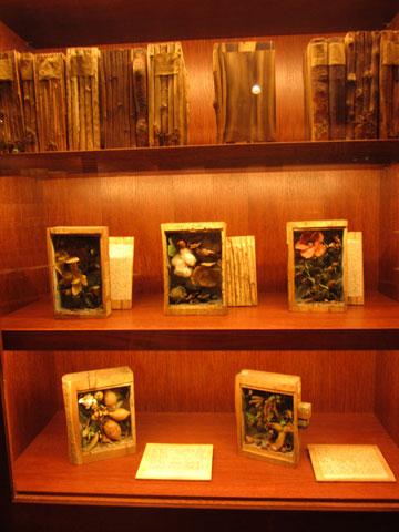 De vitrinekasten voor de boomboeken in het  Ottobeum zijn ontworpen door Mark Dion