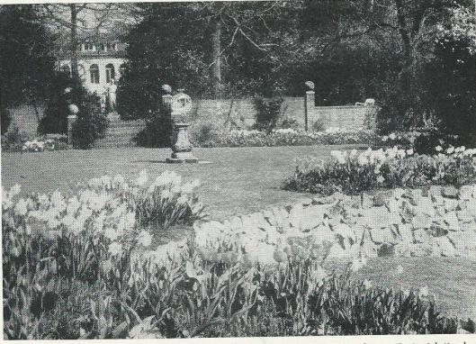 De vroegere showtuin van John van Grieken met een doorkijk naar de voormalige buitenplaats 'Duinzicht' in Bennebroek op een foto uit circa 1960