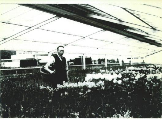W.Hageman in een tulpenkas van de FLORA 1935 nabij de vijver van Groenendaal. Links is de witte villa 'Le Tigre' aan de Herenweg zichtbaar.