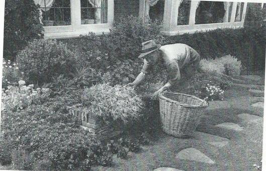 Onderhoud van tuinen. Een hovenier uit Heemstede in actie