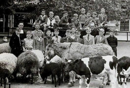 Jaarlijks uitstapje, in 1951 naar Artis, van leerlingen broederschool Mierlo-Hout onder leiding van broeder Alexius, Joosten linksachter/. Verde komen op de foto o.a. voor Jan Coolen, Andre Manders, Alex v.d. Eerenbeemt, A. Klaassen, M.Senders, Jan Verbunt, W.van Houts, W.Meulendijks en Tony van Aerle.