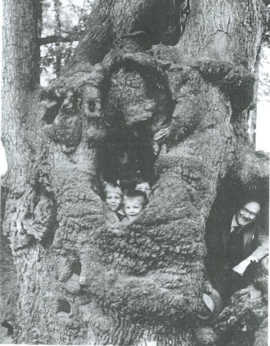 Hendrik Gerrit Cannegieter met drie van zijn kleinkinderen in de holle boom bij de uitspanning Kraantje Lek te Bloemendaal