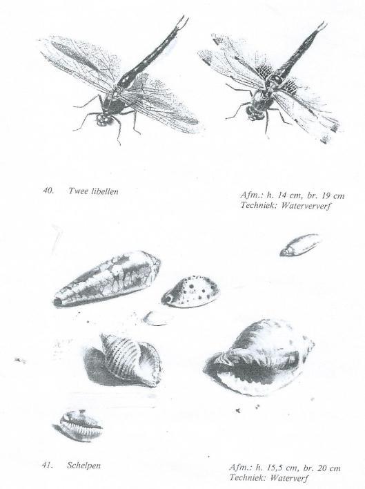 Tekeningen door Albert Steenbergen van libellen en schelpn