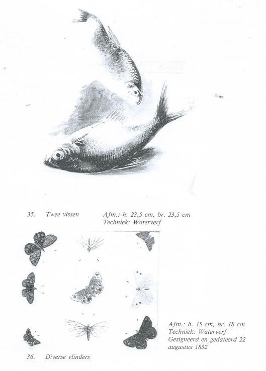 Albert Steenbergen: schetstekeningen van vissen en diverse vlinders