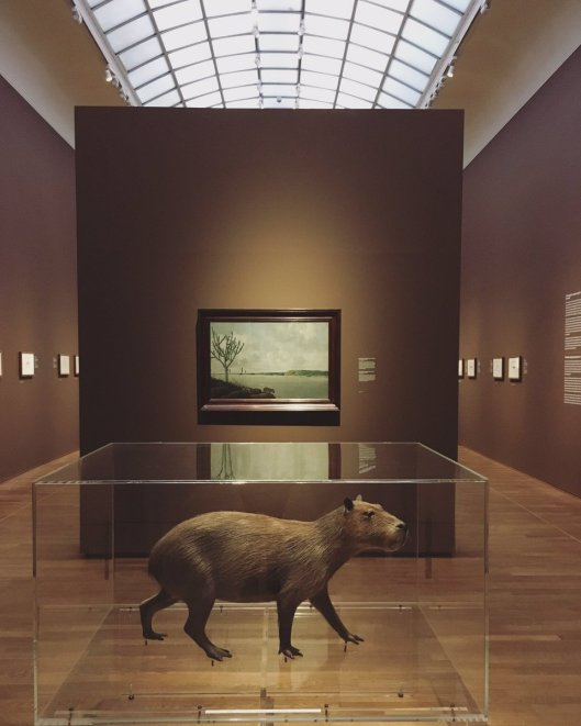 capibari
