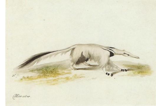 Dezelfde tekening door Pieter Holsteyn de Jonge, vermoedelijk naar Frans Post (Wesenrenaissance-Museum, Schloss Brake)