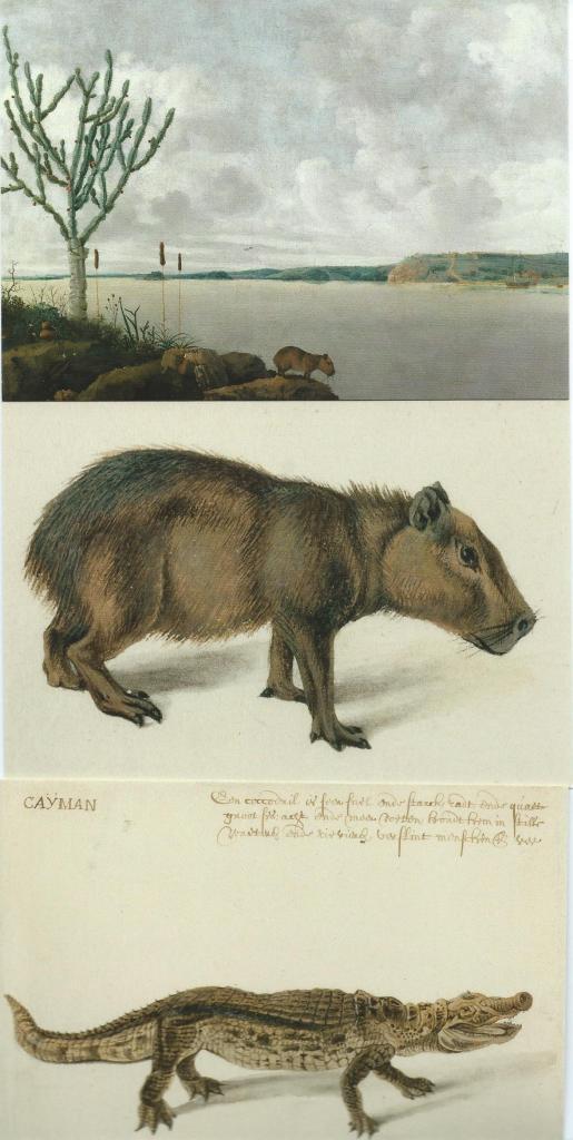 Boven: schilderij met zicht op de rivier Sao Francisco met capibara (waterzwijn) (Museum het Louvre, Parijs). Midden: tekening van capibara (NHA). Onder: tekening van kaaiman (NHA)