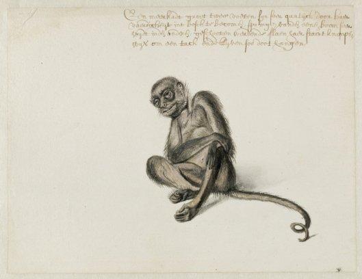 Frans Post: tekening van een slingeraap (NHA)