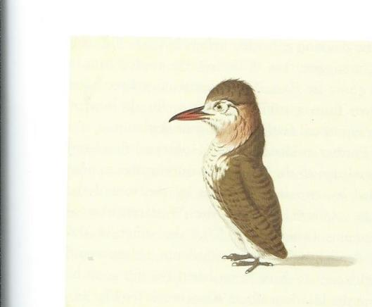 Tekening van stuifvogel door Pieter Holsteyn (naar Frans Post?)