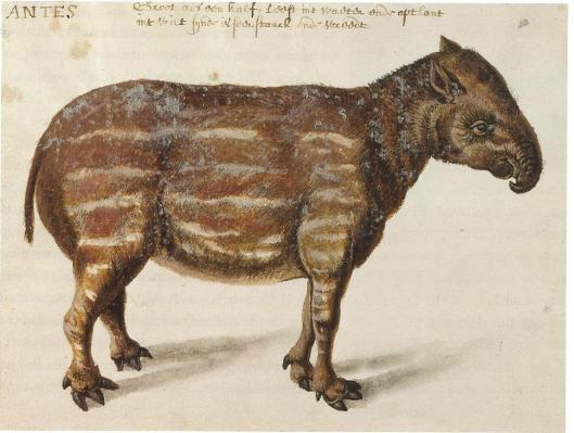Tekening van tapir door Frans Post (NHA)