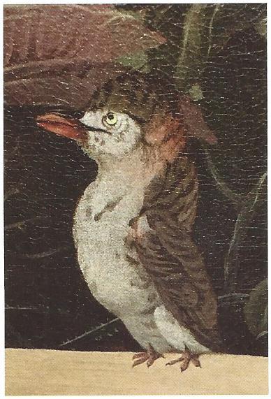Dezelfde vogel door Frans Post; detail van schilderij: Braziliaans landschap, 1652 (Rijksmuseum)