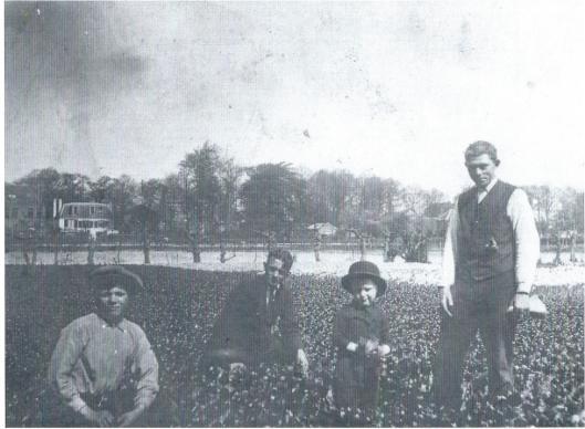 Adam Zwater (tweede van links) op het bollenveld van de ondernemende vander Jan Zwarter (helemaal rechts), welke laatste in 1881 met turf als brandstof begon en verder een tuinderij voor bloembollen en groenteteelt, waarna in 1900 nog een kruidenierswinkel volgde. Op de achtergrond rechts de boerderij 'Bronstee'.